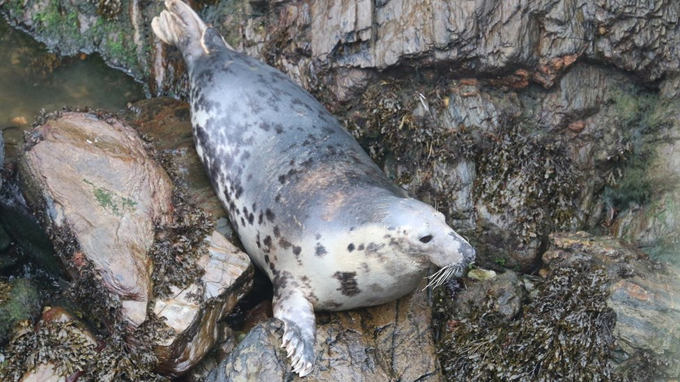 Seal on a rocky surface
