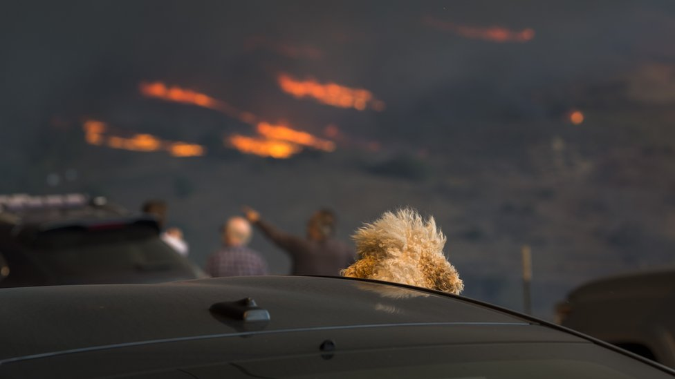 A dog watches from a car as flames approach during the Woolsey Fire