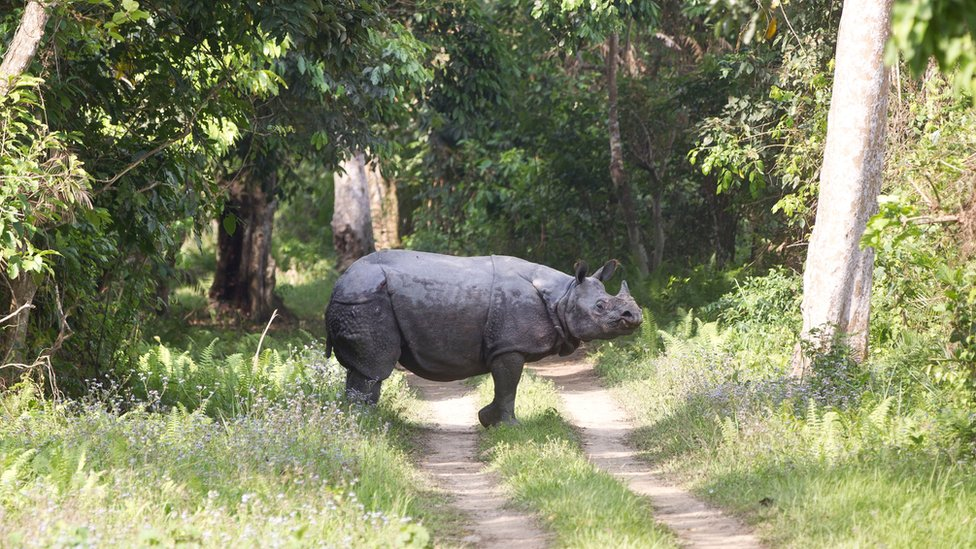 A one-horned rhino seen by the Duke and Duchess of Cambridge on safari on 13 April 2016