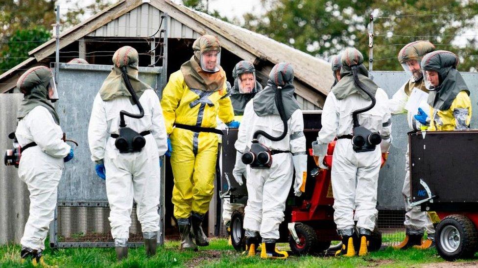 Mink culling team in Gjol, Denmark, 8 Oct 20