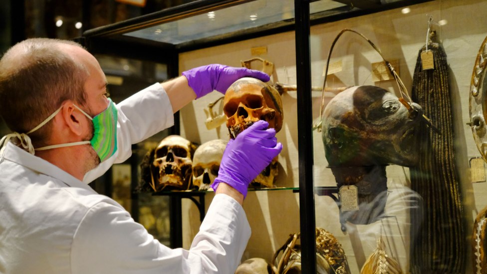 Skull being removed from a display cabinet