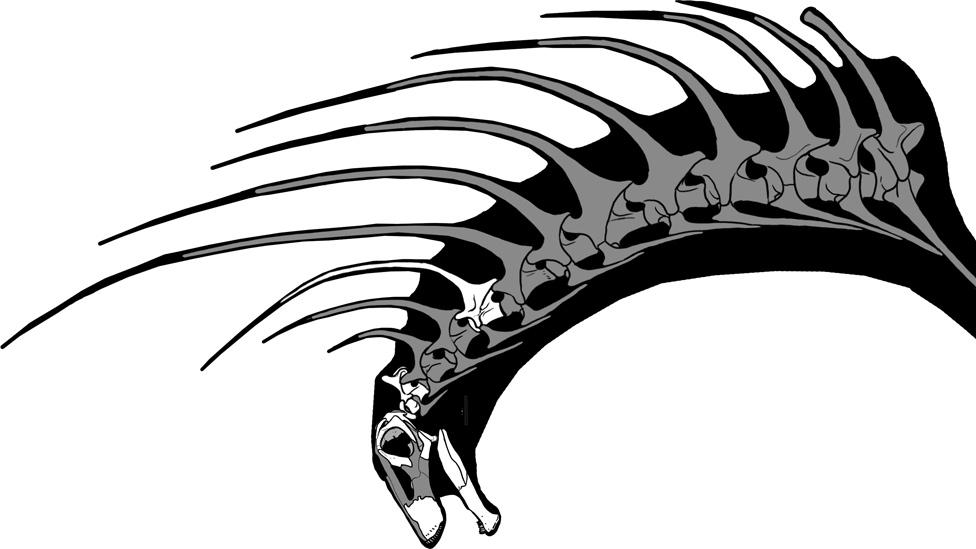 Ilustración que muestra las espinas como proyecciones de las vértebras