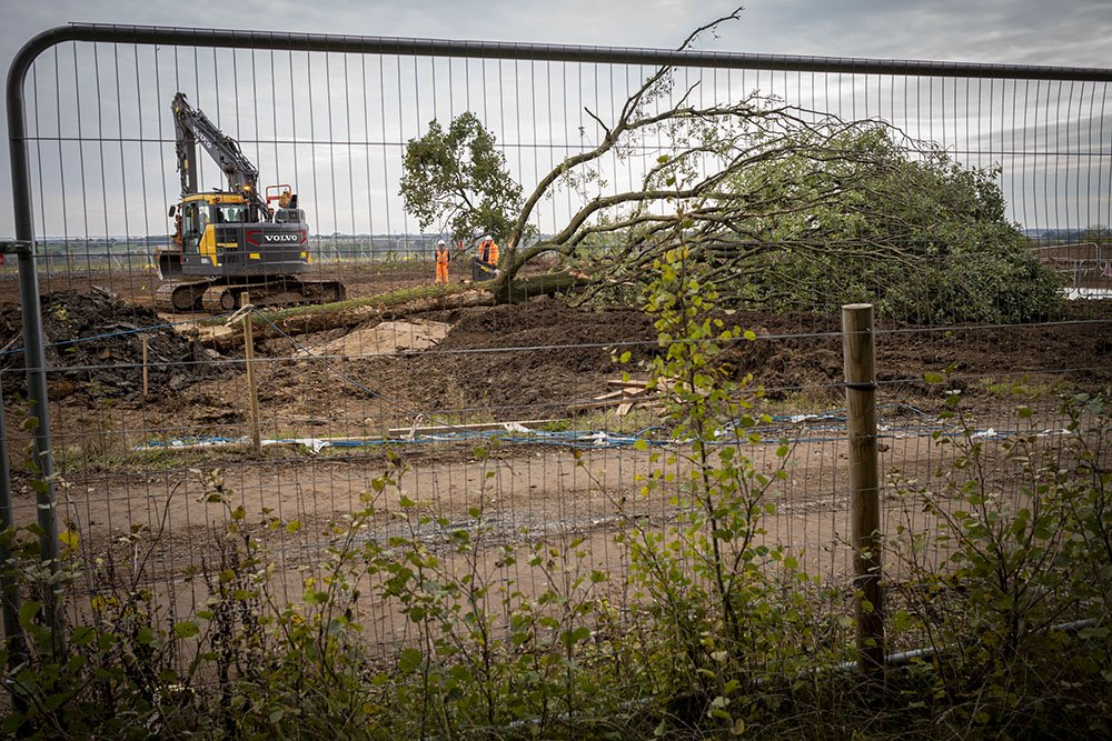 A large tree being moved to the new site
