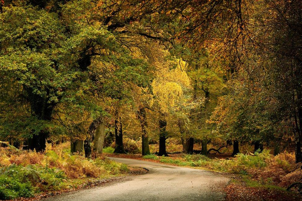 A path through through a wood