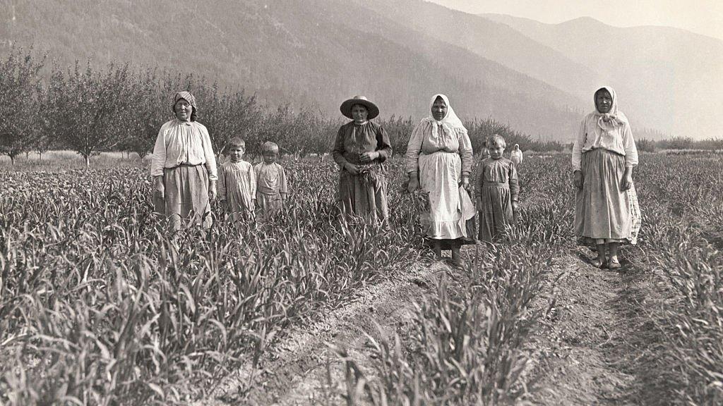 Pie de foto original de 1910: Doukhobors en una de las numerosas granjas modelo gestionadas de forma cooperativa por el asentamiento de Kootenay, Columbia Británica, Canadá.
