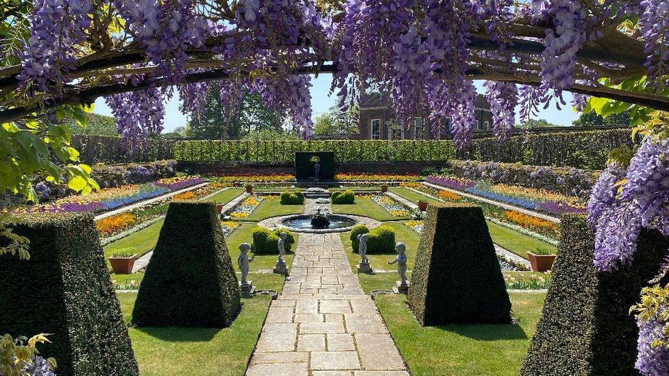 沒有多少人有幸目睹今年的花園景觀