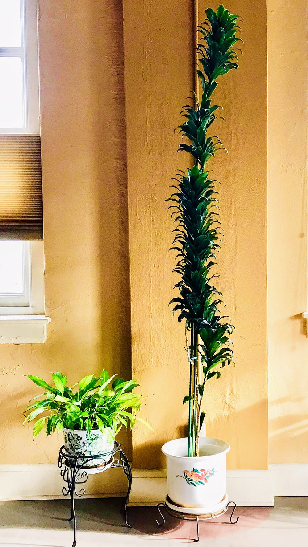 Plants in a home