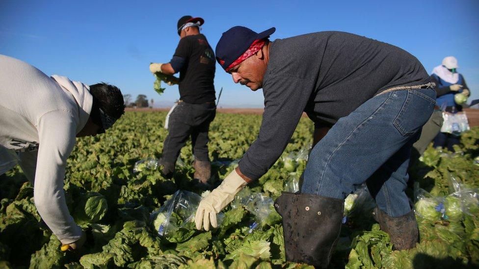 Trabajadores inmigrantes en los cultivos de EE.UU.