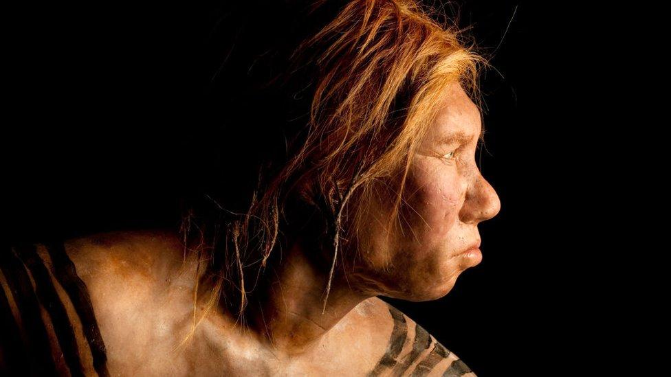 Recriação do rosto de uma mulher neandertal