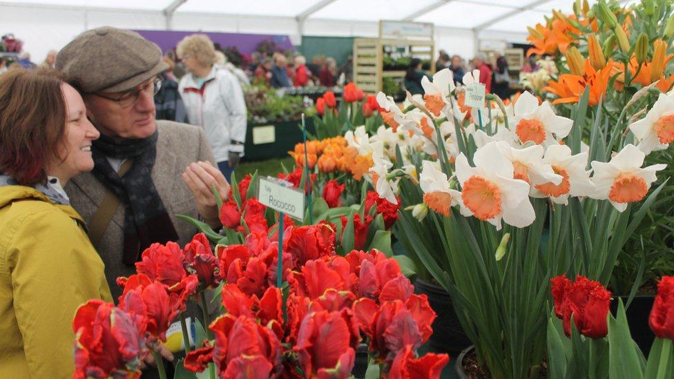 Alan a Margaret o Sir Caer yn trafod blodau wedi eu hudo i Gymru i weld y blodau // Anne and Margaret from Cheshire discussing the tulips.