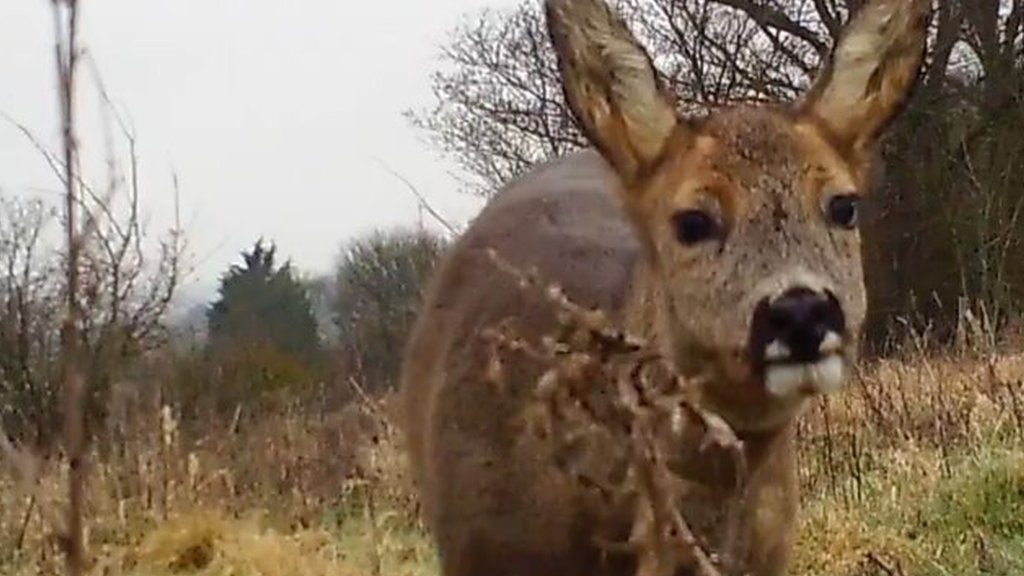 Broads Authority cameras capture garden wildlife