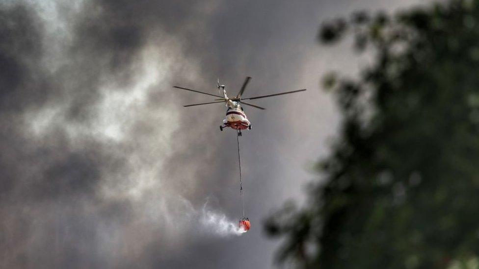 В Турции задержали подозреваемого в поджоге лесов. Юг страны объявлен зоной бедствия