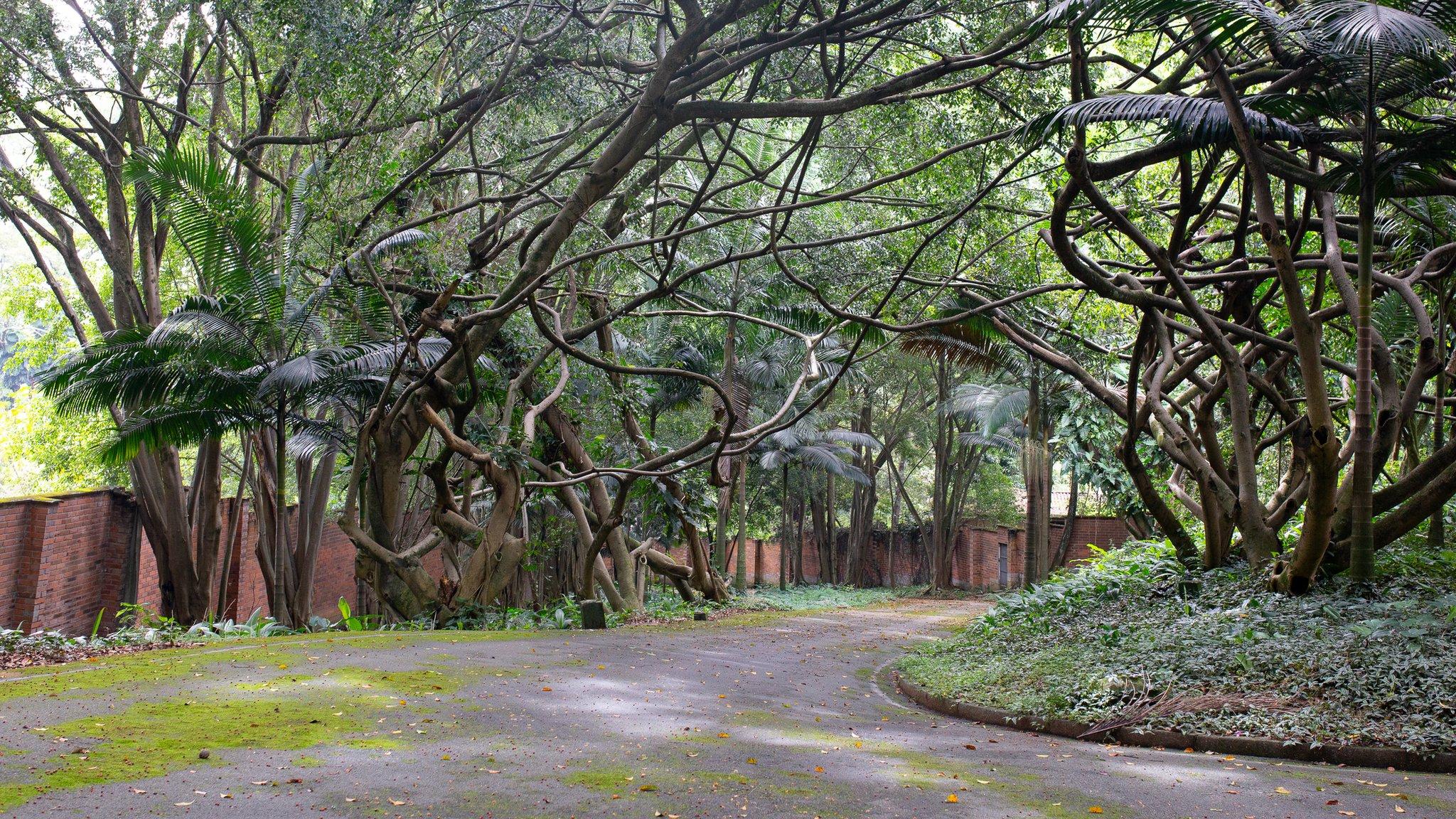 Jardín de la mansión Montecasino.
