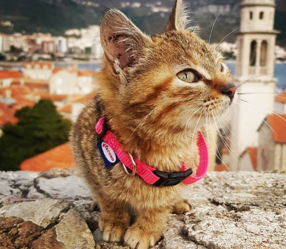 The cat who hitched a lift on a worldwide tour thumbnail