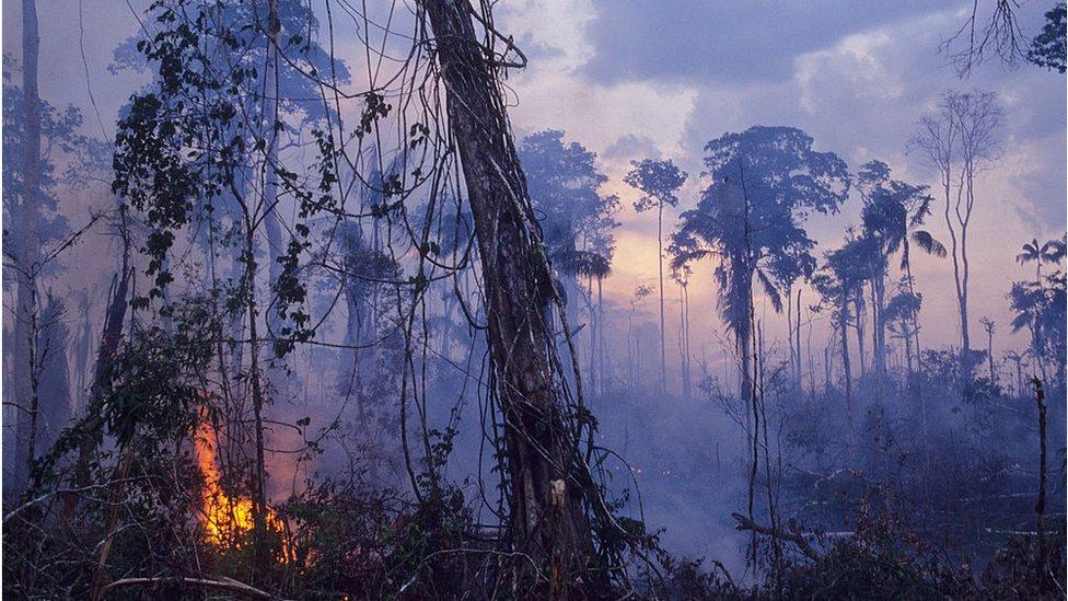 Šumski požari su se proširili u amazonskim prašumama
