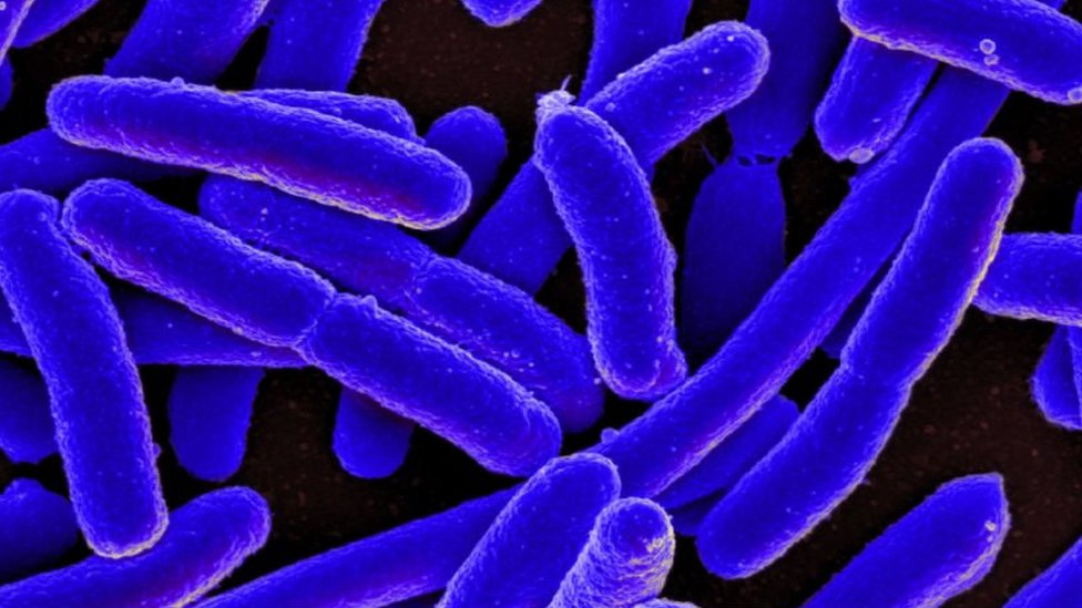 Charnwood E. coli deaths 'likely to be environmental'