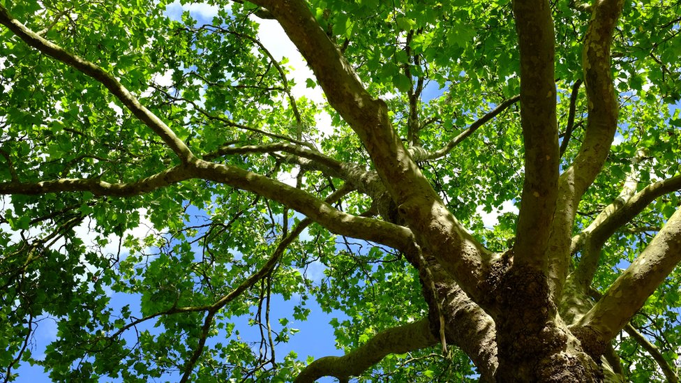 Boy stuck up tree in York cat rescue
