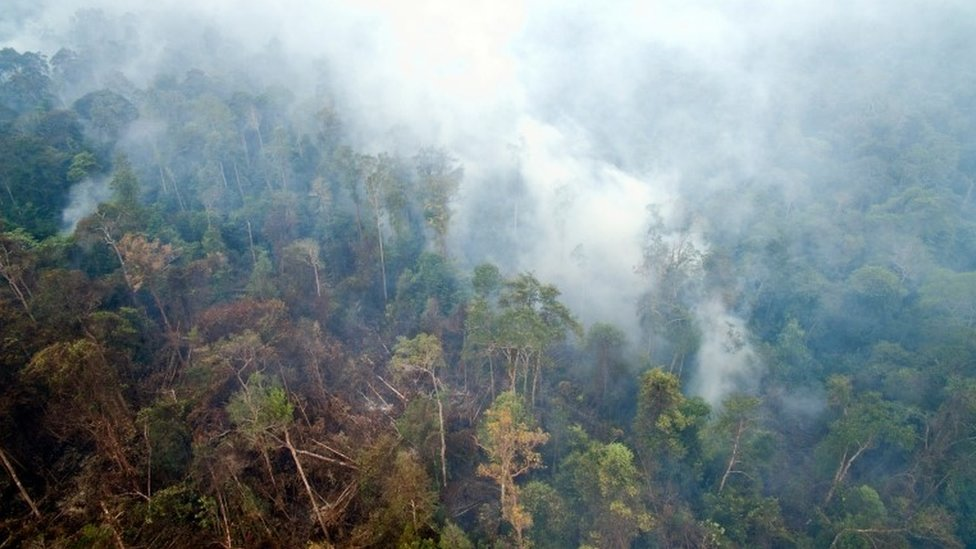 Undated handout photo issued by Greenpeace taken from drone footage of smoke from smouldering peatland fires rising through trees in forest and orang-utan habitat near a PT Artu Energi Resourses concession in Ketapang, West Kalimantan