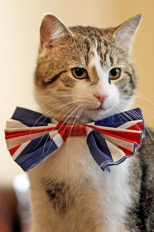Larry is bow tie