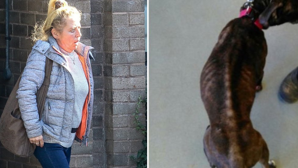 Woman 'starved pet dog to death'