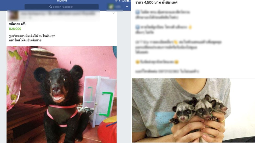 Thai Facebook wildlife listings
