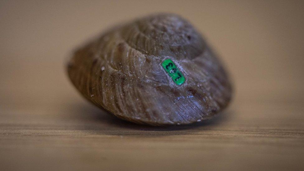Tagged snail