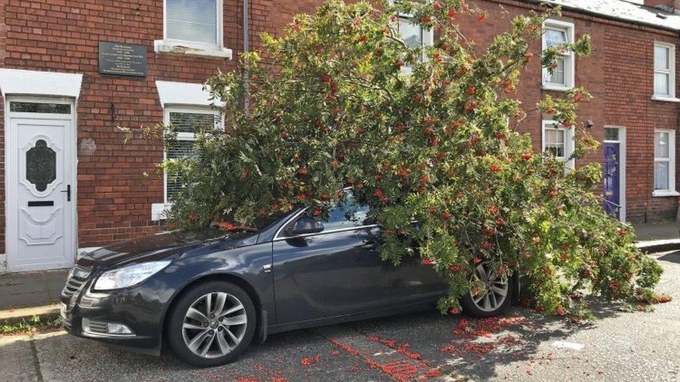 Ali: čišćenje posle jakih vetrova koji su pogodili Veliku Britaniju