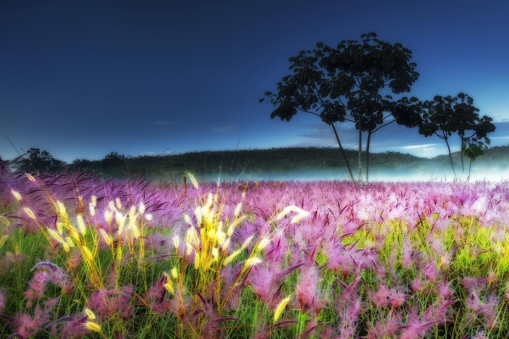 Golden Grass by Marcio Cabral