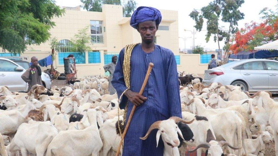 أسواق الماشية في داكار