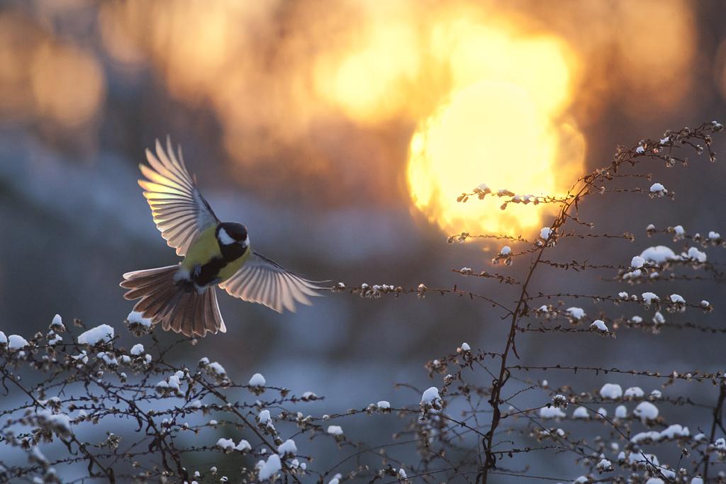 At Sunset by Mateusz Piesiak