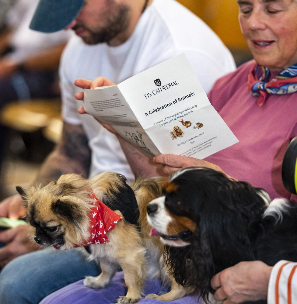 dogs and order of service