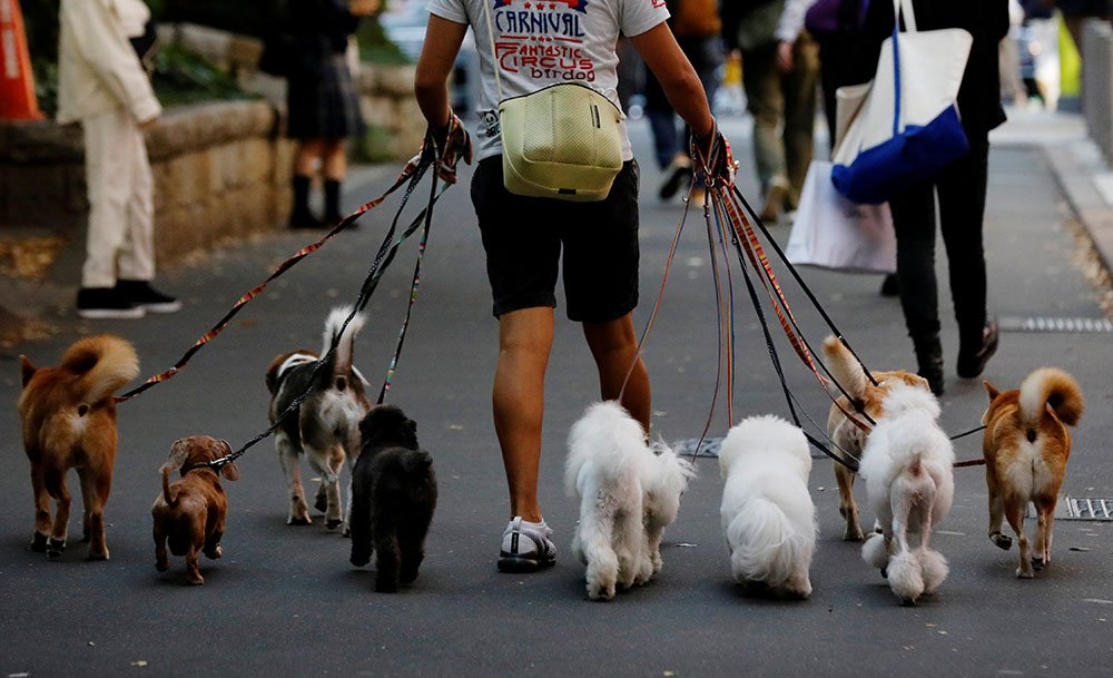 Dog walker in Japan