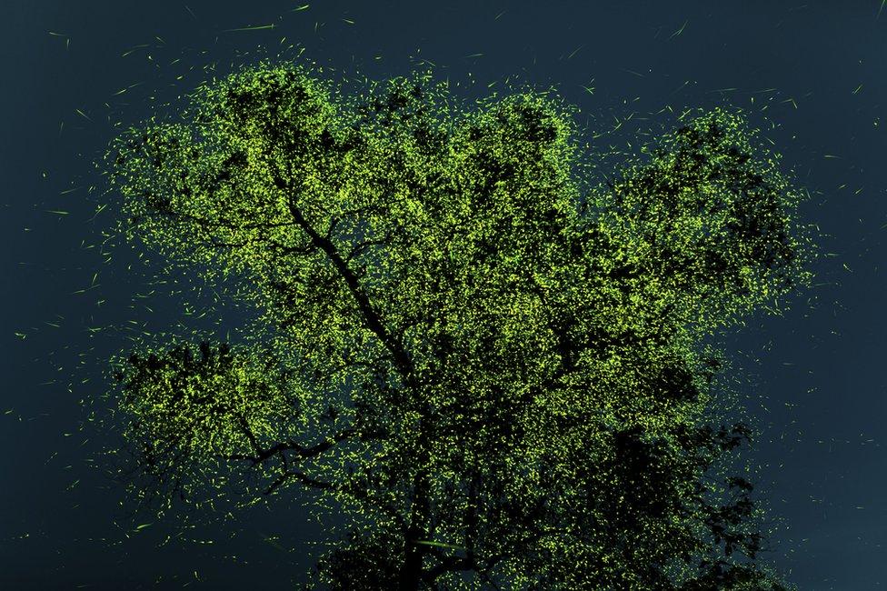Drvo načičkano svicima