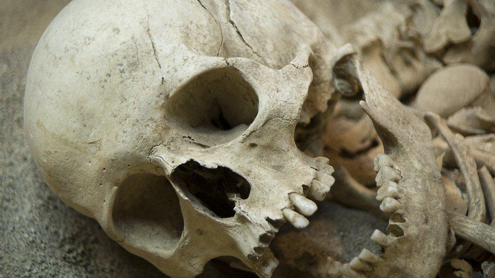 neandertales extinción