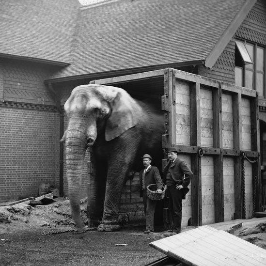Jumbo con il suo custode Matthew Scott e un altro uomo allo Zoo di Londra Foto: Wiki Commons