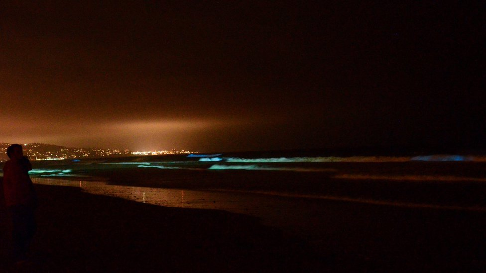 Distant city lights contrast with the algae riding the waves