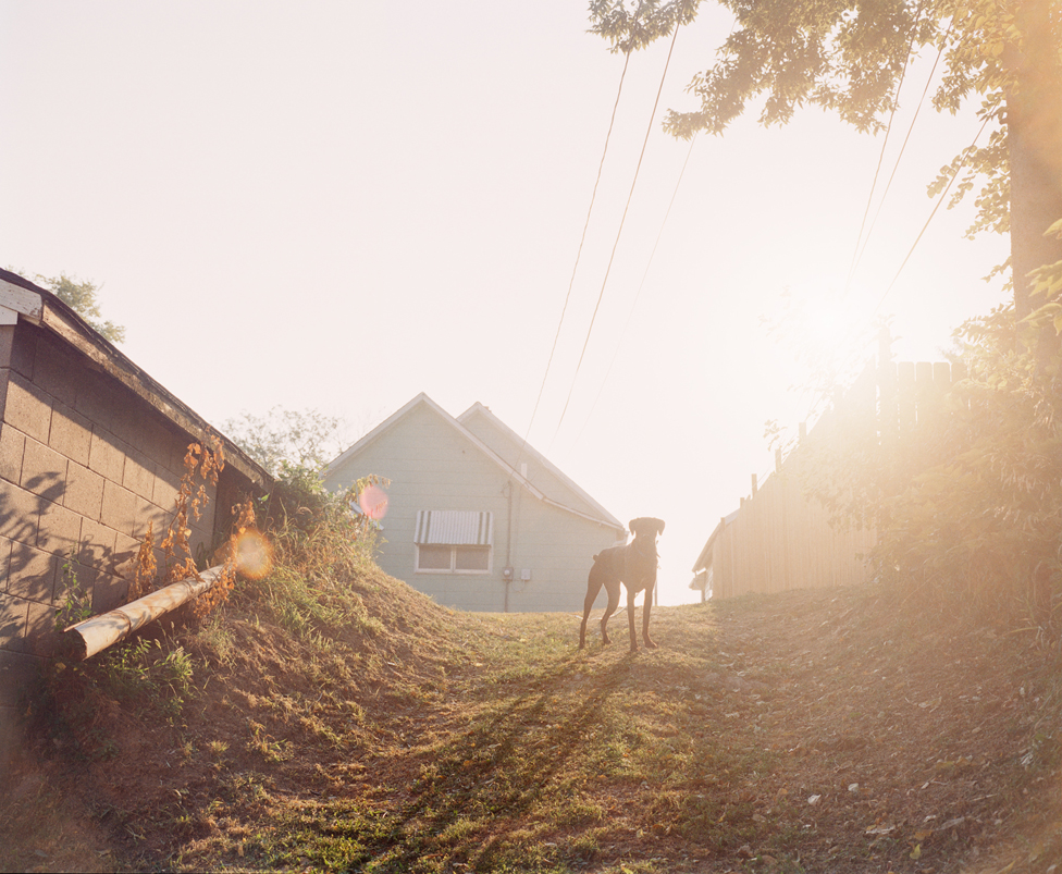 Dog on hill at sunrise