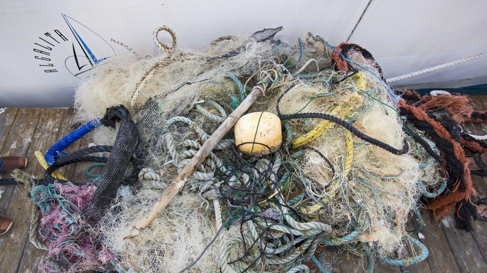 Desechos de la pesca