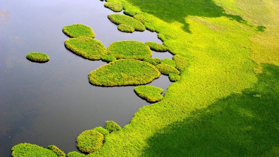 Sudd wetlands