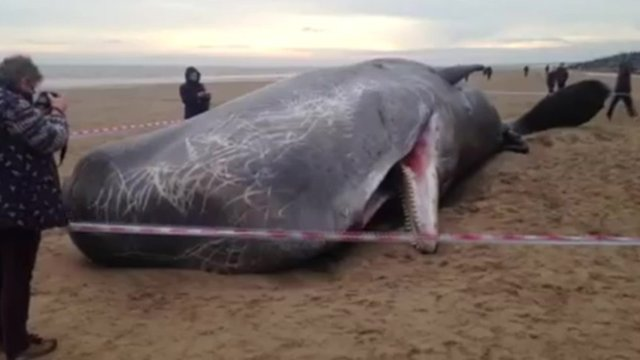 Person photographing dead whale
