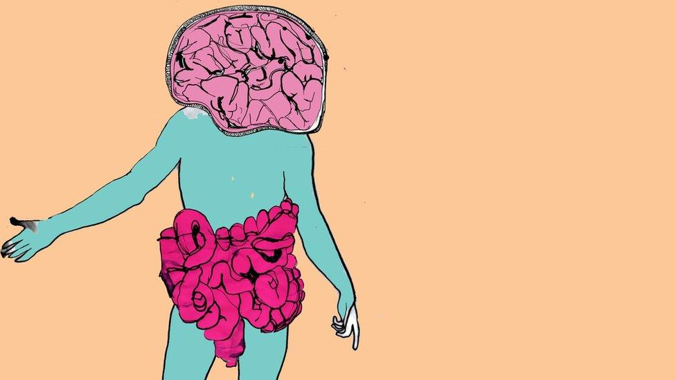 Cerebro e intestinos. Ilustraciones de Katie Horwich.