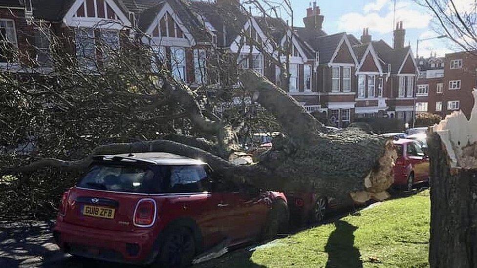 Tree on car