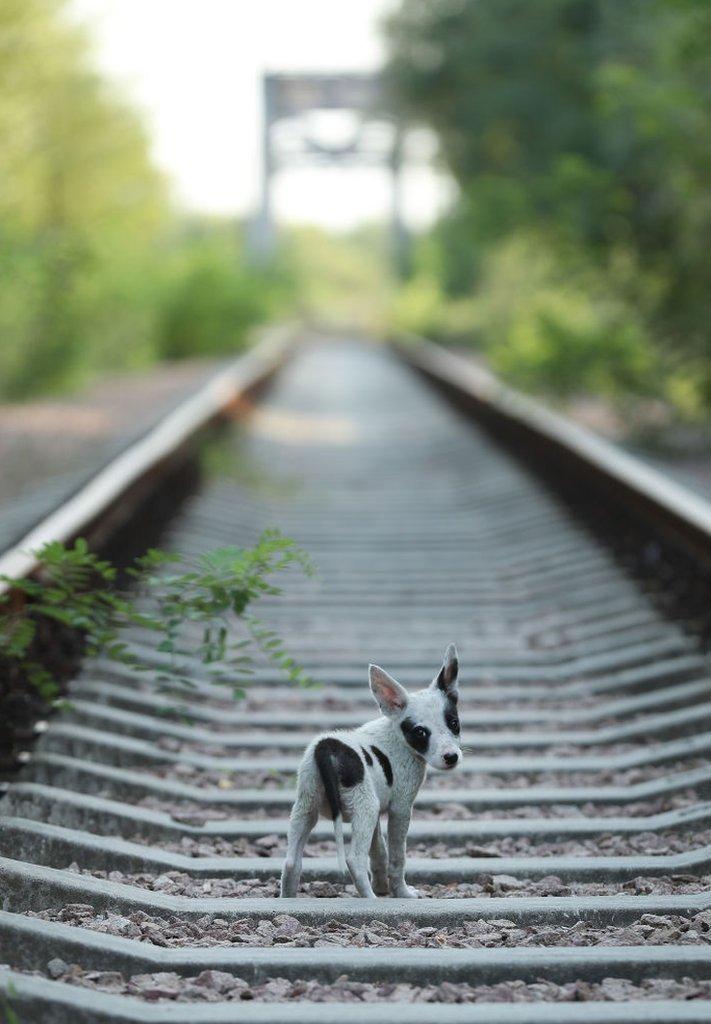 Un cachorro callejero camina a lo largo de unas vías de tren cerca de la planta nuclear de Chernóbil, en 2017.