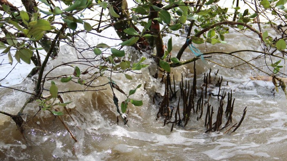 Mangrove roots dissipating energy from waves (Image: Mark Spalding)
