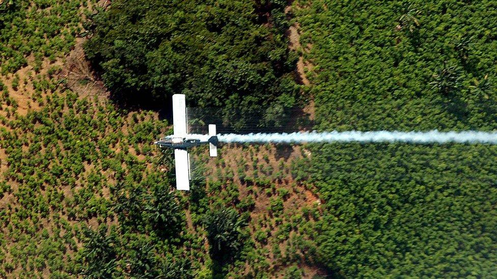 Avión fumiga cultivo ilícito de coca en Colombia