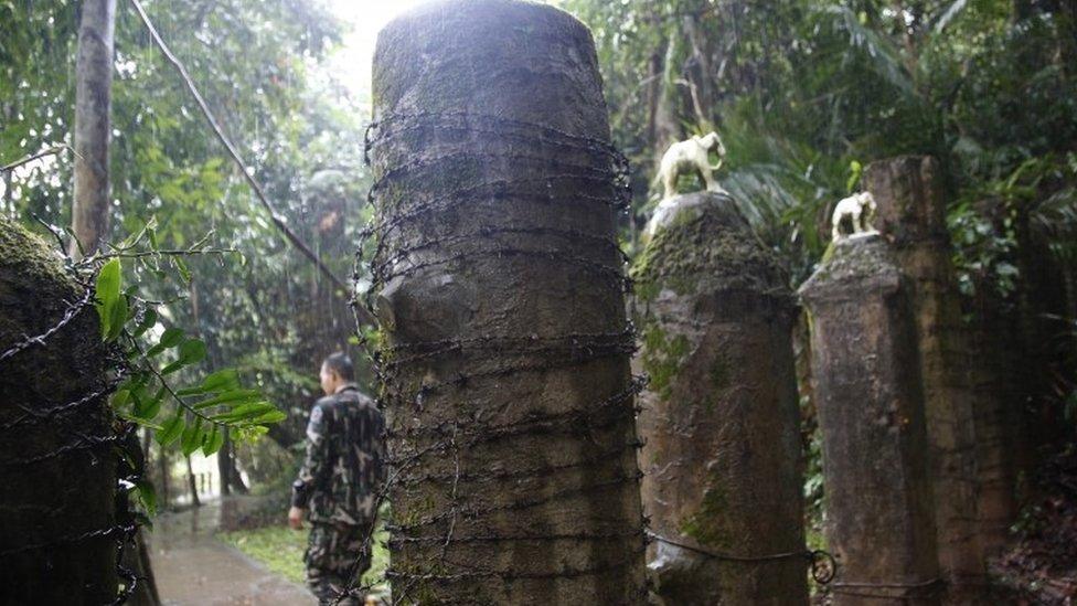 أسوار من الخرسانة وُضعت في المناطق الخطرة لمحاولة منع الأفيال من دخولها