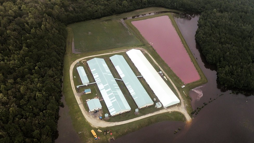 A pig waste lagoon in North Carolina after Hurricane Florence