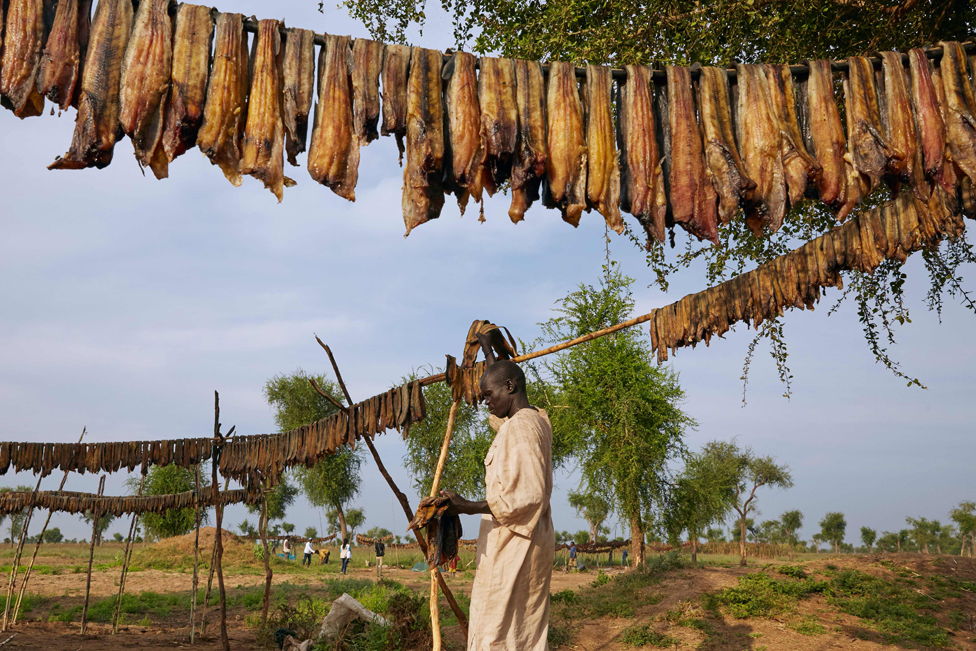 A man hanging out fish to dry in Maban, South Sudan - Tuesday 26 November 2019