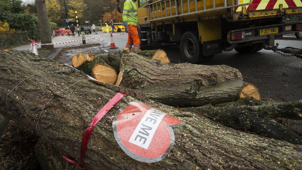 Michael Gove: Sheffield City Council 'in thrall' over tree-felling