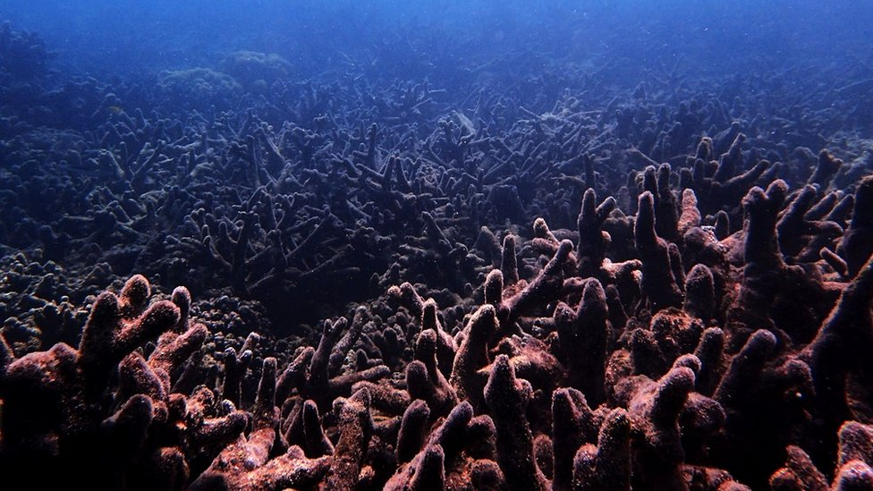 Degraded coral on the Great Barrier Reef